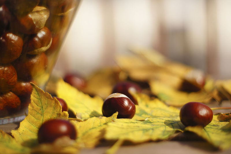 Close-up of chestnuts with autumn leaves on table