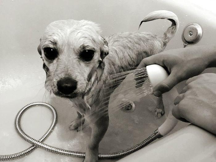 Portrait Of Bathing Dog