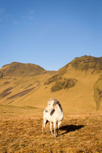 Horse grazing on grass against mountain