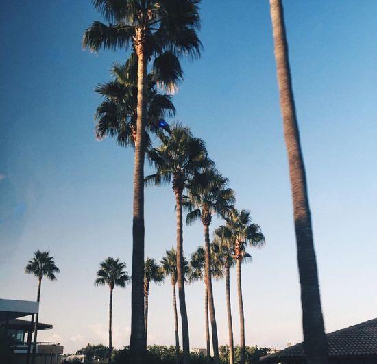 Island life 🌴