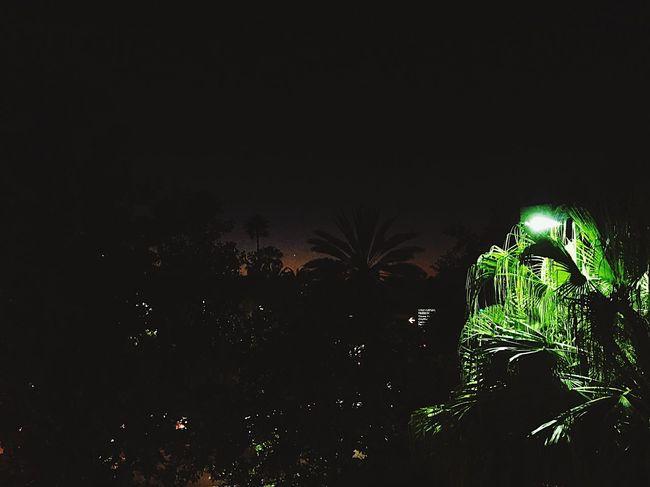 Palm tree sunsets Palm Tree Night Florida Universal Studios  Sunset First Eyeem Photo