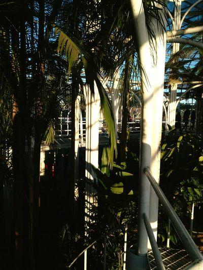 Light And Shadow Lihgts Capture Tomorrow Tree Palm Tree Architecture