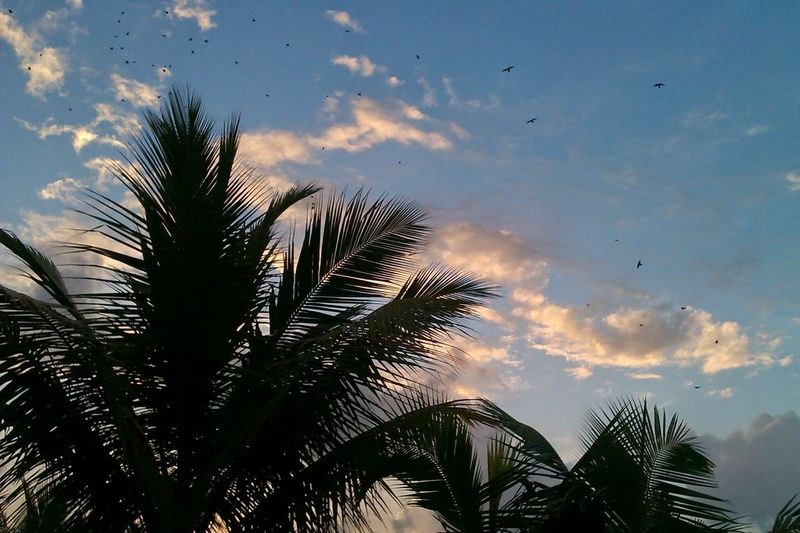 Tree Coconut Tree Awesome Birds Clouds Sky Mumbai Cool Evening Sky Nature Photographyinmotion Blue Sky Relaxing