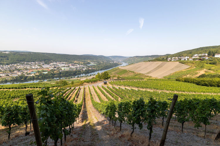 Panoramic view at the moselle valley and the city bernkastel-kues with vineyard in foreground