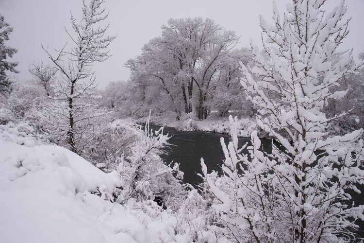 Out the front door.... Truckee Riverwalk Beauty In Nature Cold Temperature Covering Day No People Outdoors Plant River Scenics - Nature Snow Tranquil Scene Tranquility Tree Truckee River Winter