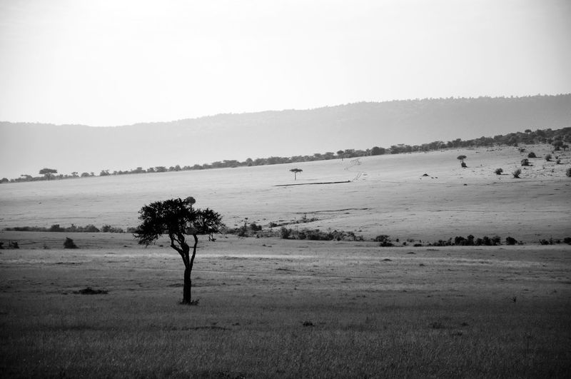 Beautiful Massai Mara national reserve park. Africa African Safari African Safari Wildlife Park Beauty In Nature Black And White Landscape Blackandwhite Photography Day EyeEm EyeEm Best Shots EyeEm Gallery EyeEm Nature Lover EyeEm Photo Of The Day Hi Landscape Landscape Photography Landscape_Collection Massai Mara Nature Nature Reserve No People Outdoors Scenics Sky Tranquil Scene Tree EyeEmNewHere