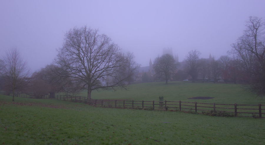 Foggy morning 4 Ely Cathedral Bare Tree Beauty In Nature Clear Sky Day Field Foggy Landscape Foggy Morning Grass Landscape Nature No People Outdoors Scenics Sky Tranquility Tree