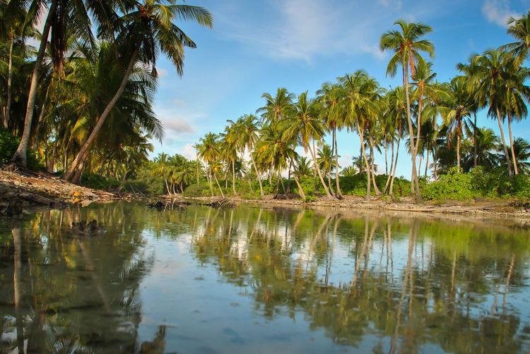 Addu Adducity Nature Tropical Traveler Freelancerlife Photooftheday Island Nikonphotography Like From My Point Of View Maldives Freelance Life Nikon Woods Islands Savetheplanet Tropical Holiday Coconut Trees