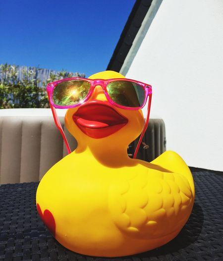 Duck Ducks Ducks😄 Duck Photography Cool Duck Funny Duck Funny Ducks Summer Ducky DUCKS :) Ducky  Quietscheente Quietscheentchen Enten Entchen Rubberducky Rubberduck Rubber Duck Rubber Ducky Rubber Ducks Rubber Duckies