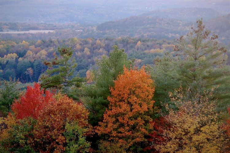 High angle view of trees in forest during autumn