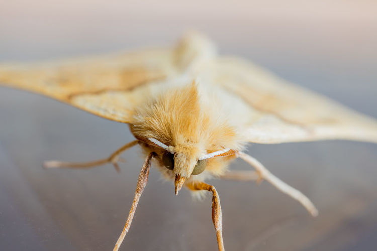 Close-up of moth