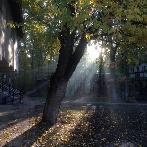 Tree Light And Shadow Hodmezovasarhely