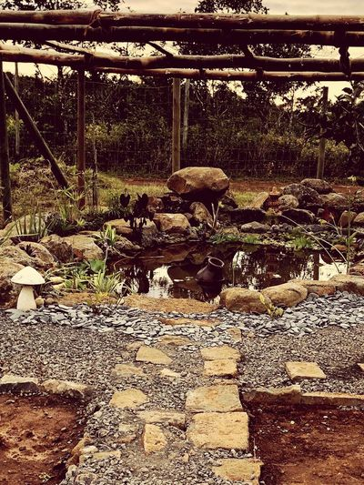 Our escape home, our natural pond.. Ecology Concept Natural Pond Mammal Sunlight Domestic Animals No People Land