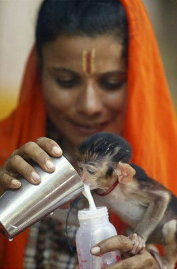 Sadhuvi, a holy hindu women feeding a baby monkey.... Taking Photos Hello World True Wandering Best Of EyeEm Honor4x Holy Monkey Baby Monkey Holy Women Women Sadhvi Milk Milk Feeding Feeding Animals Nature Wow...