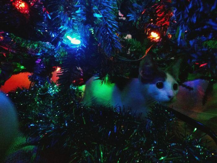 Merry Christmas First Eyeem Photo
