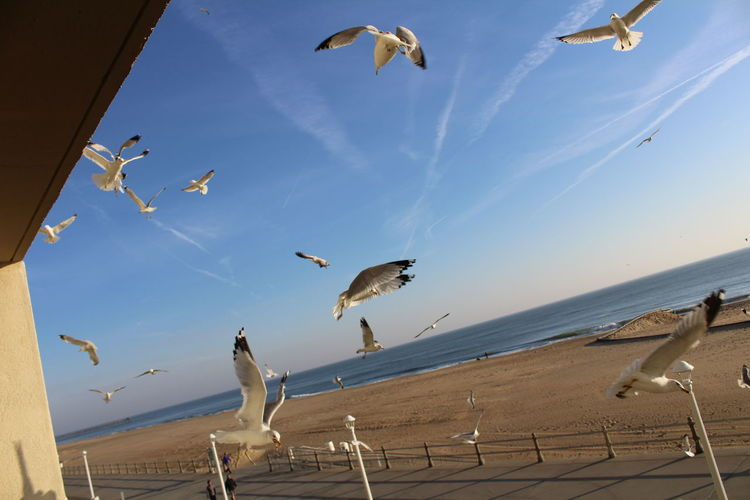 Animal Themes Avian Beauty In Nature Bird Cloud Cloud - Sky Day Flying Horizon Over Water Medium Group Of Animals Mid-air Nature No People Outdoors Sea Bird Seagull Seagulls Sky Spread Wings Tranquility Wildlife