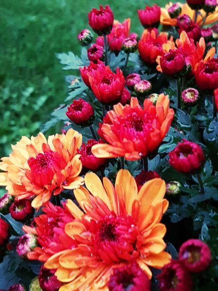 Flower Water Nature Beauty In Nature Petal Fragility Freshness Flower Head Red Day Plant No People Outdoors Lake Tranquility Growth Close-up Pflanze  Blumen Rot Gelb Natur Sarah7790
