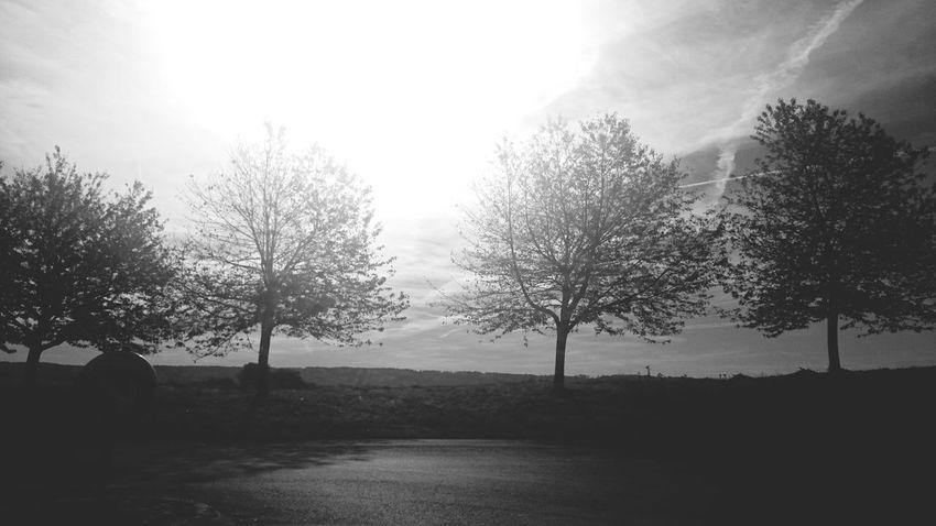 Wonderful Sunny Day in Autumn , Enjoying Life, Blackandwhite