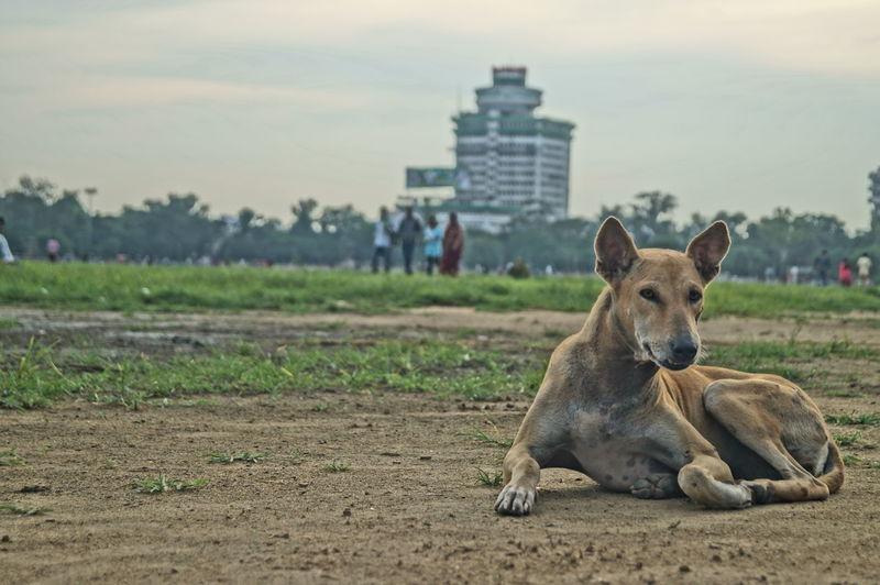 Dog sitting on field in city