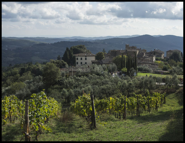 Agriculture Architecture Beauty In Nature Building Exterior Country Of Wine Growth Landscape Mountain Range Nature No People Outdoors Rural Scene Scenics Sky Toscana ıtaly Toscananelcuore Tranquility Travel Destinations Tree Tuscany Tuscany Countryside Tuscany Italy Tuscany Landscape Vineyard Winemaking