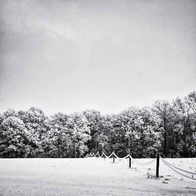 Winter   6 Black & White Winter Beauty In Nature Black And White Black And White Photography Black&white Blackandwhite Blackandwhite Photography Blackandwhitephotography Clear Sky Cold Temperature Field Landscape Nature Outdoors Scenics Snow Squarecrop Tranquil Scene Tranquility Tree Winter