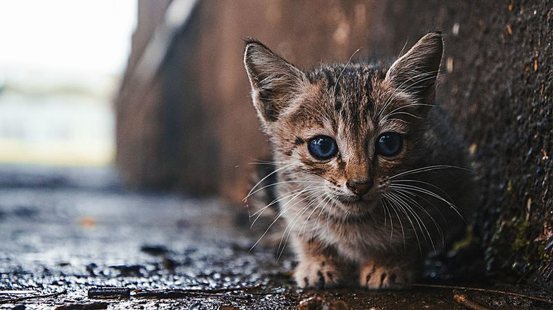 One Animal Animal Themes Close-up Day Animal Wildlife No People Outdoors Animals In The Wild Nature Catlover Kitty HomeAlone Lonely Cat Animalportrait BlueEyes