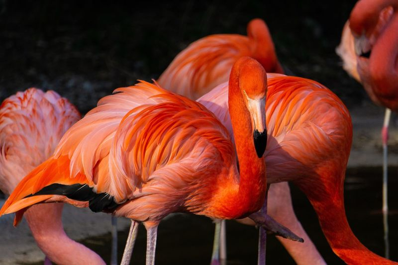 Flamingo Model Sony A6000 Flamingos In Water Flamingo Orange Color Orange Color Close-up Flamingo Animal Animal Themes Animal Wildlife Nature Focus On Foreground Flower Animals In The Wild Vulnerability  No People Flowering Plant Fragility Red Vertebrate Outdoors Representation Day