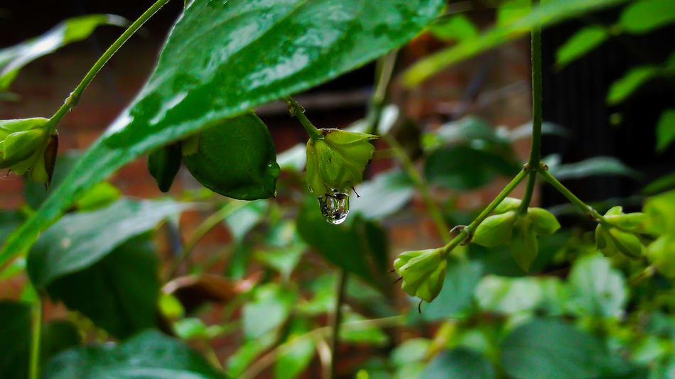 Drops Of Water Plant Leaf Nature Green Color