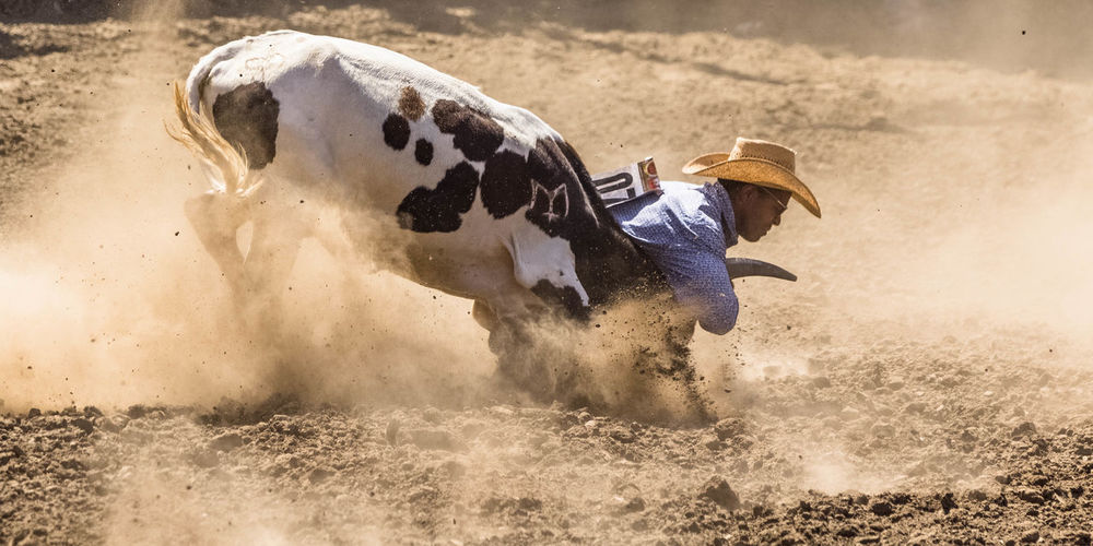 Grabbing the bull by the horns Cowboy Animal Themes Day Dust One Animal One Person Outdoors Steer Steer Wrestling