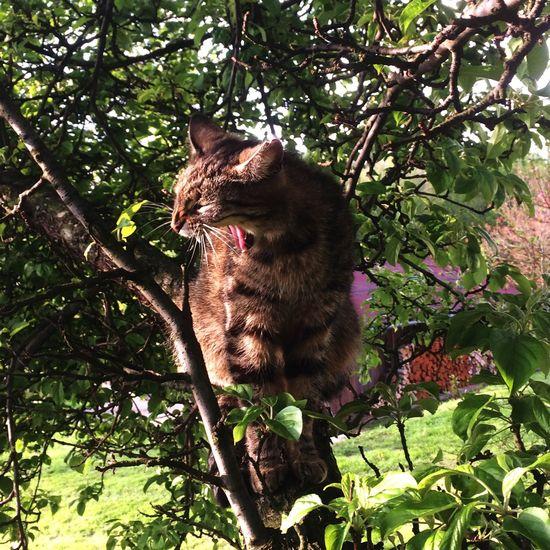 Pet Portraits Hear me roar! Queen of the Forest Cat Tree Outdoors Nature Queen Forest Roar