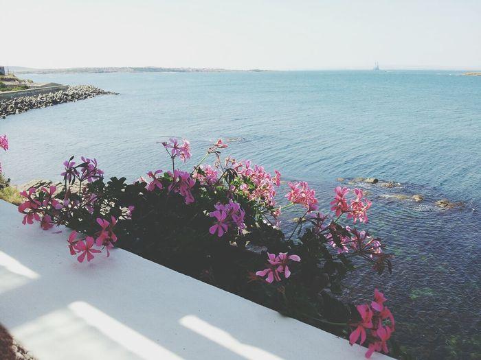 (day 6) Sea Hello World VSCO Vscocam EyeEm Best Shots Sky Flowers 365project