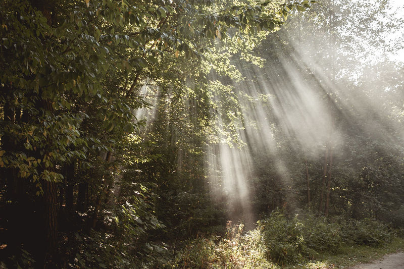 Backgrounds Beauty In Nature Day Fog Foggy Morning Grass Light Light In The Fog Light In The Forest Nature No People Outdoors Weather
