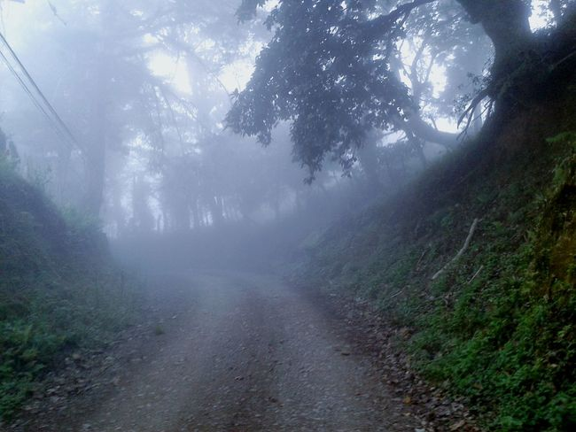 """""""way"""" Walking Around Great Atmosphere Excercising Relaxing Escaping Cloudy Day Mistery Forestwalk Forest Path Forest Of Lost Souls Romantic Landscape Secret Places Darkness And Light Nature Lovers Fog Foggy Morning Fog_collection Foggy Share Your Adventure Hiking Trail Hiking Hikingadventures"""