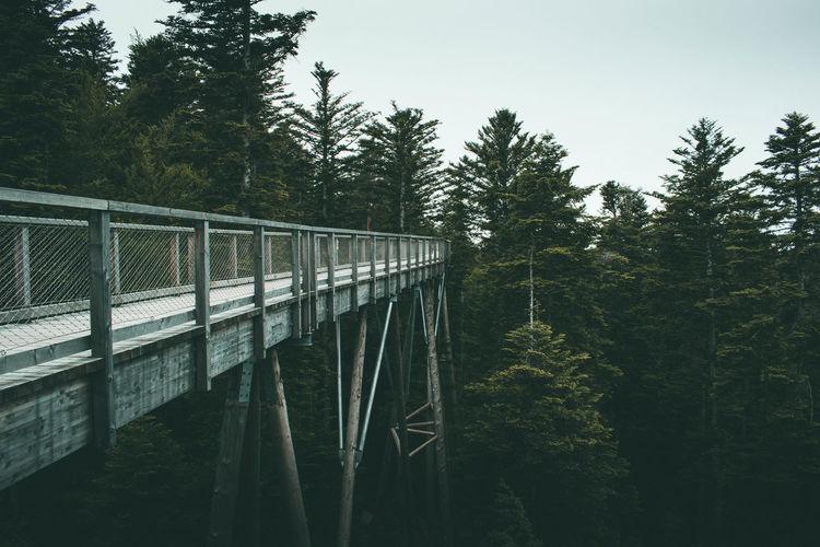 Empty footbridge in forest