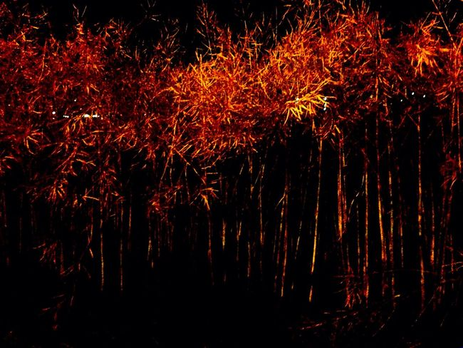 Night Outdoors No People Nature Illuminated Agriculture Raps Poison Fungicides Farm Farmer