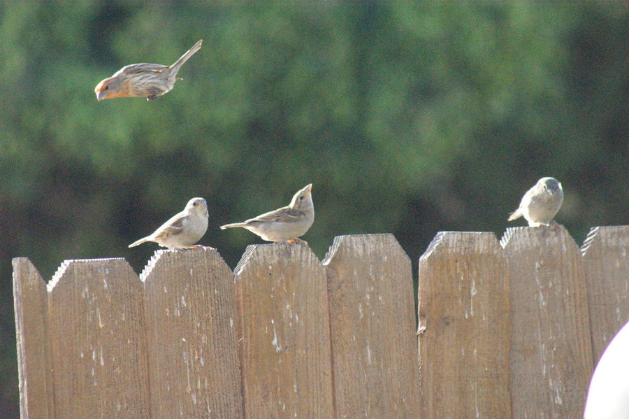 Bird Bird Brain Bird In Flight Bird Photography Bird Photos Birds Birds In Flight Birds Life Birdy Finch Finches