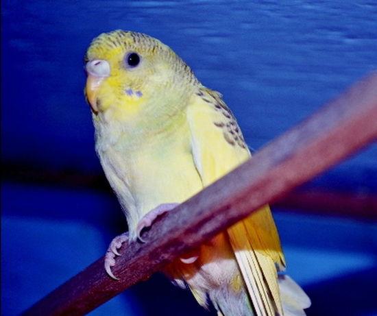 Animals In The Wild Animal Animal Body Part Animal Head  Animal Photography Animal Themes Animal Wildlife Animals Oiseau Oiseaux