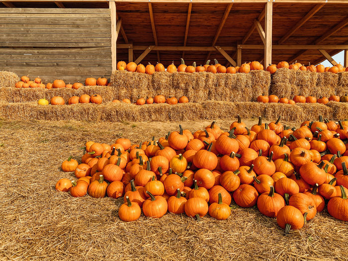 Various pumpkins in container