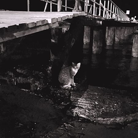 Beach Cat Night Beach Sea Cat Architecture Bridge Built Structure Bridge - Man Made Structure Connection Nature Real People Outdoors Water