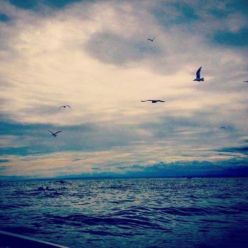 Gulls will find
