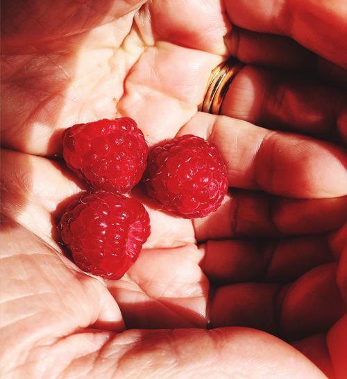 Sunlight, raspberries and my grandma's hands Things I Like