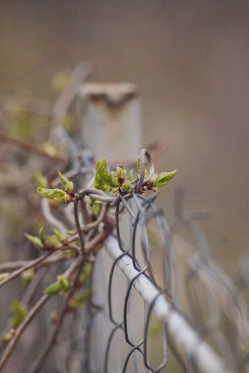 Close-up of plant growing by fence