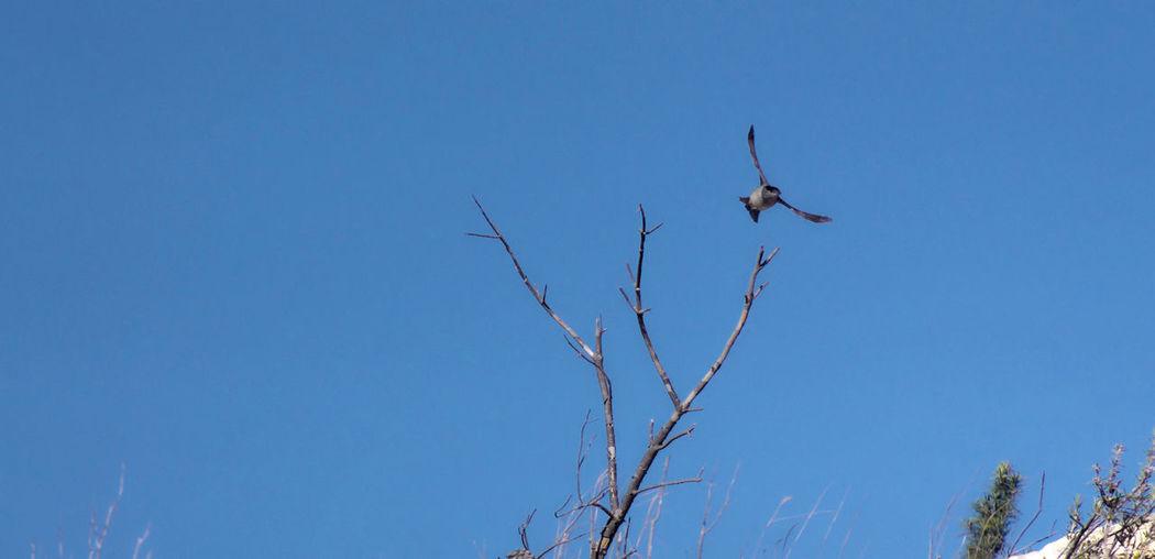 Bird Bird Photography Curruca Capirotada Fly Flying Nature One Animal Outdoors Tallarol De Casquet Warbler
