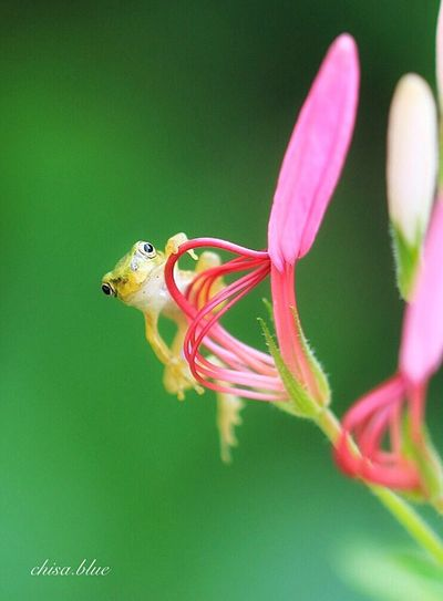 ケロロ〜ン🐸 Animal Themes One Animal Animals In The Wild Flower Beauty In Nature EyeEm Best Shots