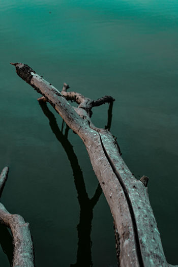 High angle view of driftwood on sea shore