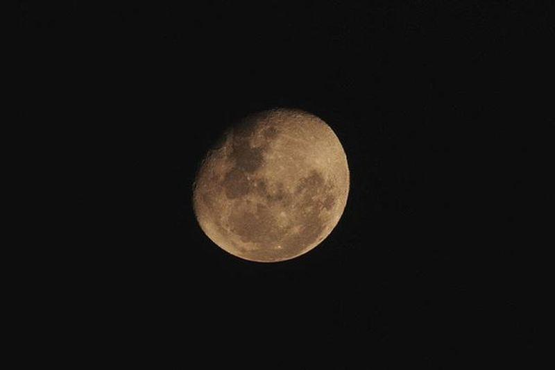 Moon 🌕🐾 Moon