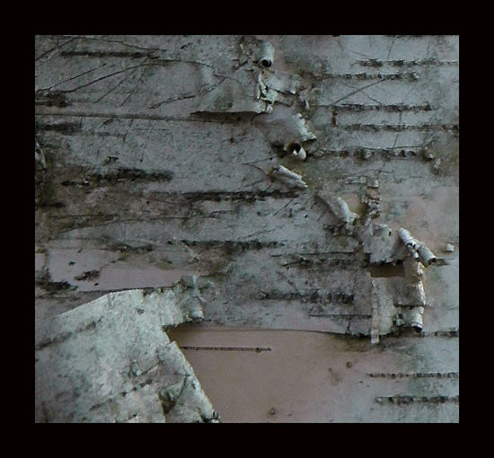 Abandoned Bark Texture Close-up Damaged Day Delicate Beauty Fragility No People Outdoors Silver Bark Tree Bark Patterns Weathered