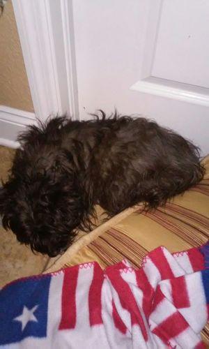 Buddys favorite sleeping spot Cute Pets