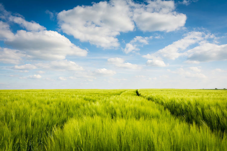 Field in summer Environment Landscape Field Growth Tranquility Outdoors Agriculture Nature Crop  Grain Summer Germany Europe Background Sachsen-Anhalt