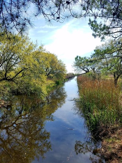 Beauty In Nature Nature Reflection Tree Sky Growth Water No People Day Outdoors Scenics Green Color Tranquil Scene Natural Parkland Forest Cawcawcountypark Ravenel South Carolina. Wetland Beauty In Nature Agriculture Rural Scene Tranquility Growth Reflection Landscape